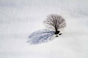 39-paysage-d-hiver-photo-arbre-et-neige