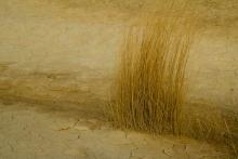 Desert-des-Bardenas-Reales-Espagne-végétation-sèche