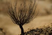 desert-bardenas-buisson-sec-photo-flore