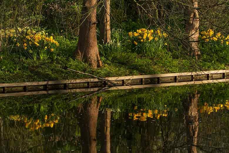 9 Reflet des arbres Pays-Bas