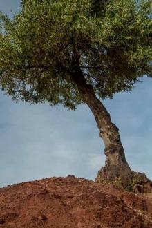 photo-olivier-Andalousie-Espagne