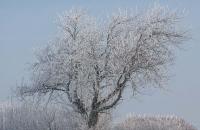 131-photo-arbre-givré
