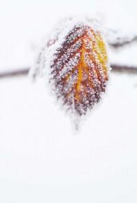 136-photo-givre-sur-feuille-automne-en-gros-plan