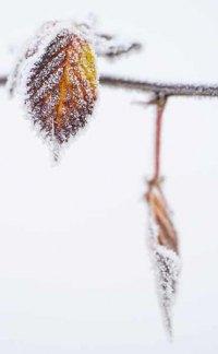 138-photo-givre-sur-feuille-automne-en-gros-plan