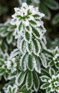 141-photo-givre-plante
